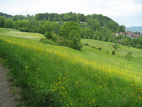 Flower-covered field in west Zurich.