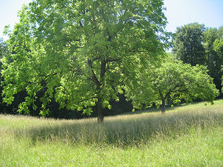 treaa and grass